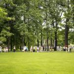 Вид с основной дорожки Михйловского сада