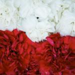 Цветы, цветы, цветы...