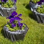 Фиалки - любимые цветы Шопена